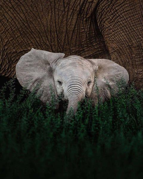 なんで象はこどもの頃からおばあちゃんみたいにシワシワなんでしょうか?