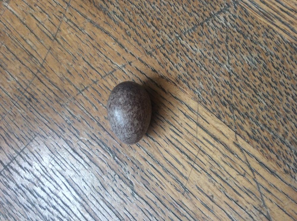 今日、卵らしきものを家の庭で見つけたのですが これは卵なんでしょうか? 卵だとしたら何の種類の卵でしょうか?