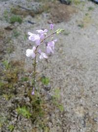 この植物はなんという名前ですか? 雑草ですか?