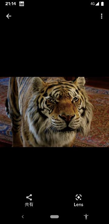 映画アラジンでジャスミン姫を守っているトラのラジャーは何て種類のトラですか?