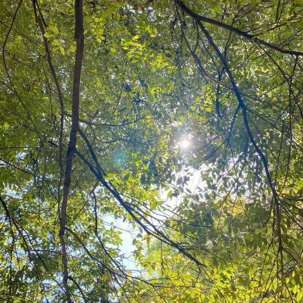 この写真の太陽の左側に映ってる緑色の光はオーブでしょうか?