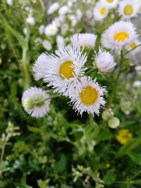 このお花は何という名前でしょうか?