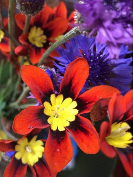 中心が黄色で花びらが橙色の花は何という名前ですか?