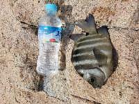 この魚の名前を教えてください。それと食べれますか?