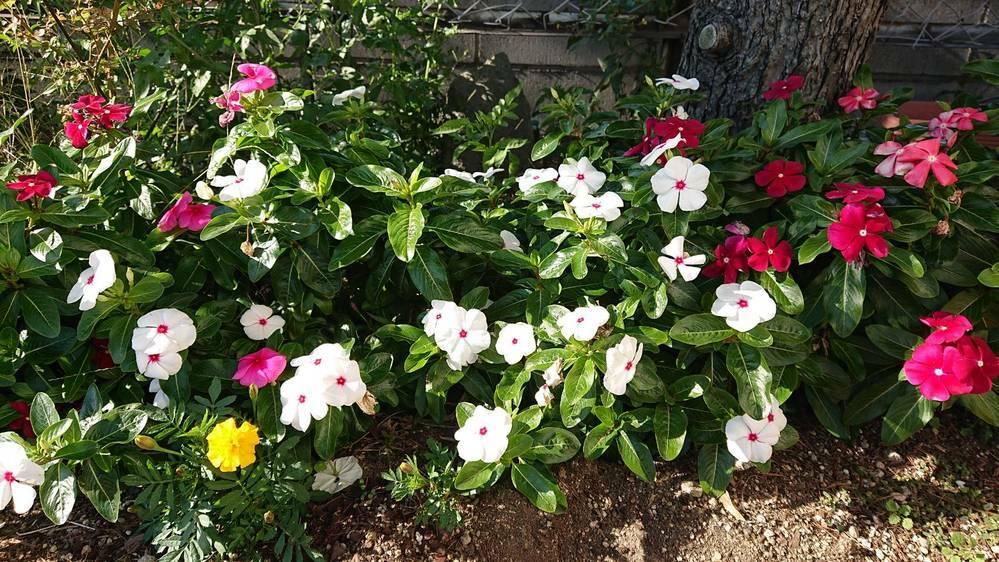 写真の花の名前がわかる方いたら教えてください!!