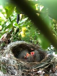 鳥の巣がありました。 この鳥はなんですか?