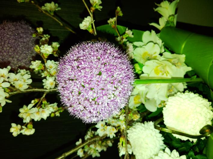 直径15 CM くらいの まんまるの 紫色のお花でした くきは割と太めでしっかりしています 何というお花か知っている方 よろしくお願いいたします
