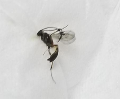 虫に詳しい方教えてください この虫はなんですか?