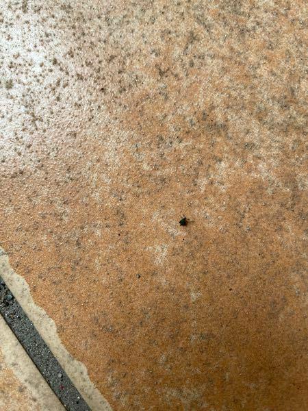 この虫はなんですか? 玄関の前に大量にいました。