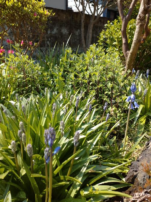 この青紫の花の名前何でしょうか? 画像小さくてすみません