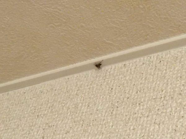 天井に蜘蛛がいましたこれは処分したほうがいいのでしょうか?