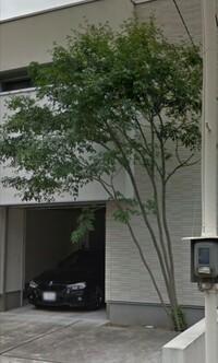 この木はなんとゆう木でしょうか?わかる方教えて下さい。