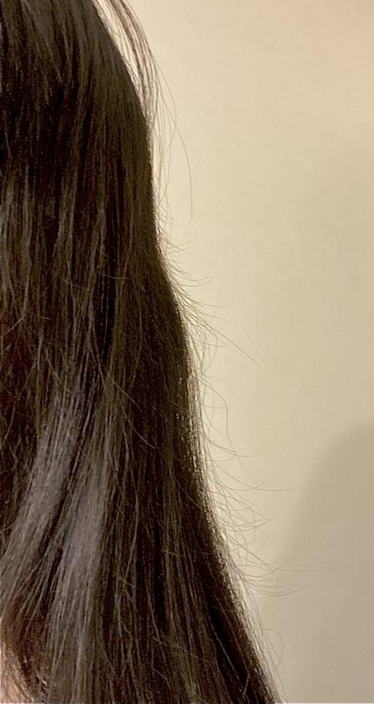 毎年このくらいの時期になると髪がドサッと抜けます… 正しいヘアケアについて調べて実行したり、生活習慣に気をつけているのですが、やはりこのくらいの時期に大量に抜けてしまいます。 犬や猫のように、人間にも毛が抜ける時期のようなものがあるのでしょうか? 毎年抜けているせいで髪が写真のように長さが不揃いになっていてダサいんです…