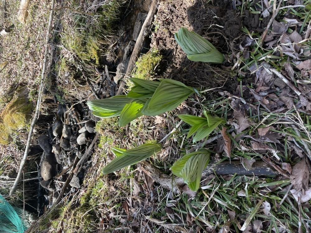 この植物はなんですか??