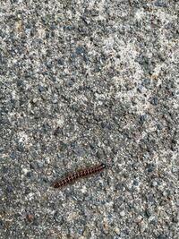 画像あります! 閲覧注意!!  家の周り、壁、道路にこの虫が大量発生してます。 なにかの幼虫だとは思うのですが、何の幼虫なのか詳しい方がいたら教えてほしいです。 また大量発生の理由として考えられる事も教...