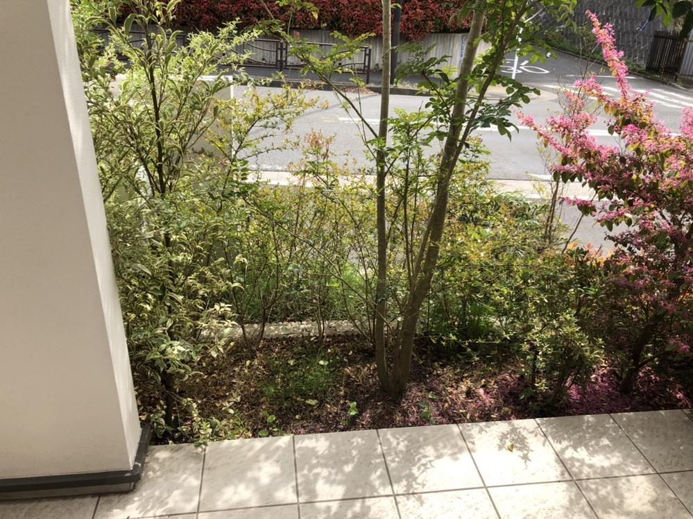 植え込みの手入方法について教えてください。 まったくの初心者なんですが、こういう植え込みはどういう手入れ?掃除をしたらいいのでしょうか。 雑草を抜くくらいの事はするんですけど、雑草と枯葉がきりなくて、いつも荒れ果てた感じになってしまいます。 いい掃除・手入方法があれば教えてください。