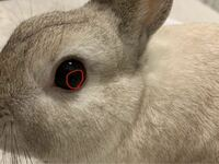 うさぎの目にミミズみたいなやつがいます!! これは何でしょうか?病院行った方がいいですか?