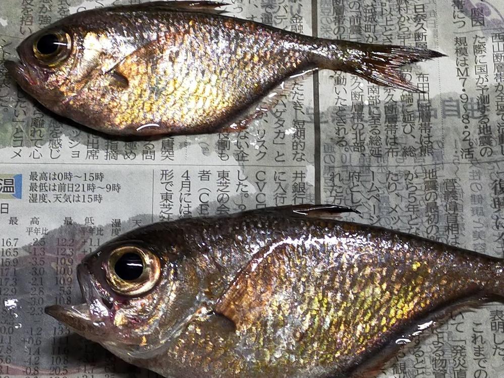 長崎県で釣りをした際に釣れた魚なのですが、この写真の魚は何という魚ですか?