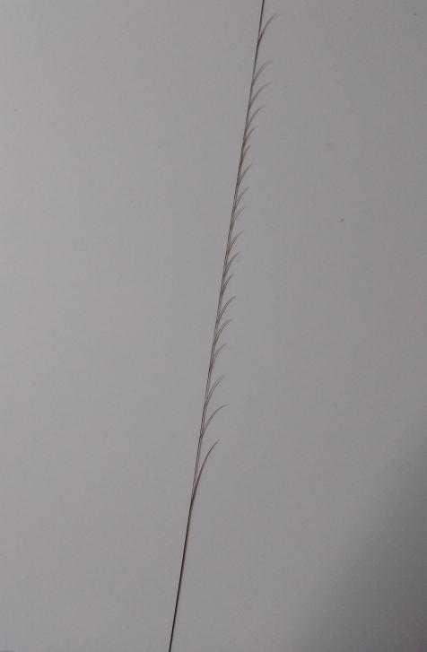 とんでもない枝毛を見つけてしまいました!! 感想お待ちしております!!