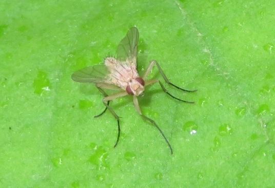 どなたか、この昆虫の名前を教えていただけないでしょうか。ハエの仲間の幼生でしょうか。