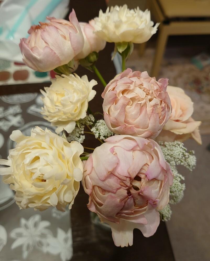 このお花の名前が分かる方教えて下さい よろしくお願いします