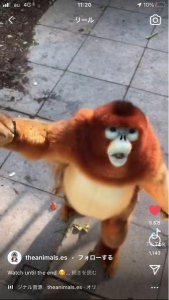 これはなんていう猿ですか?