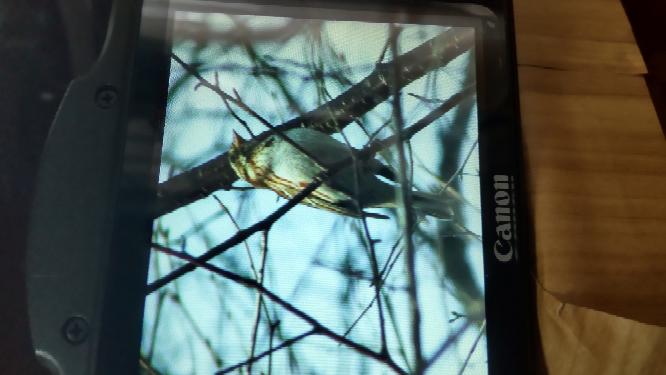 山で撮影した写真です。 画像が荒くてすいませんが 野鳥の名前はなんですか。 よろしくお願いします。