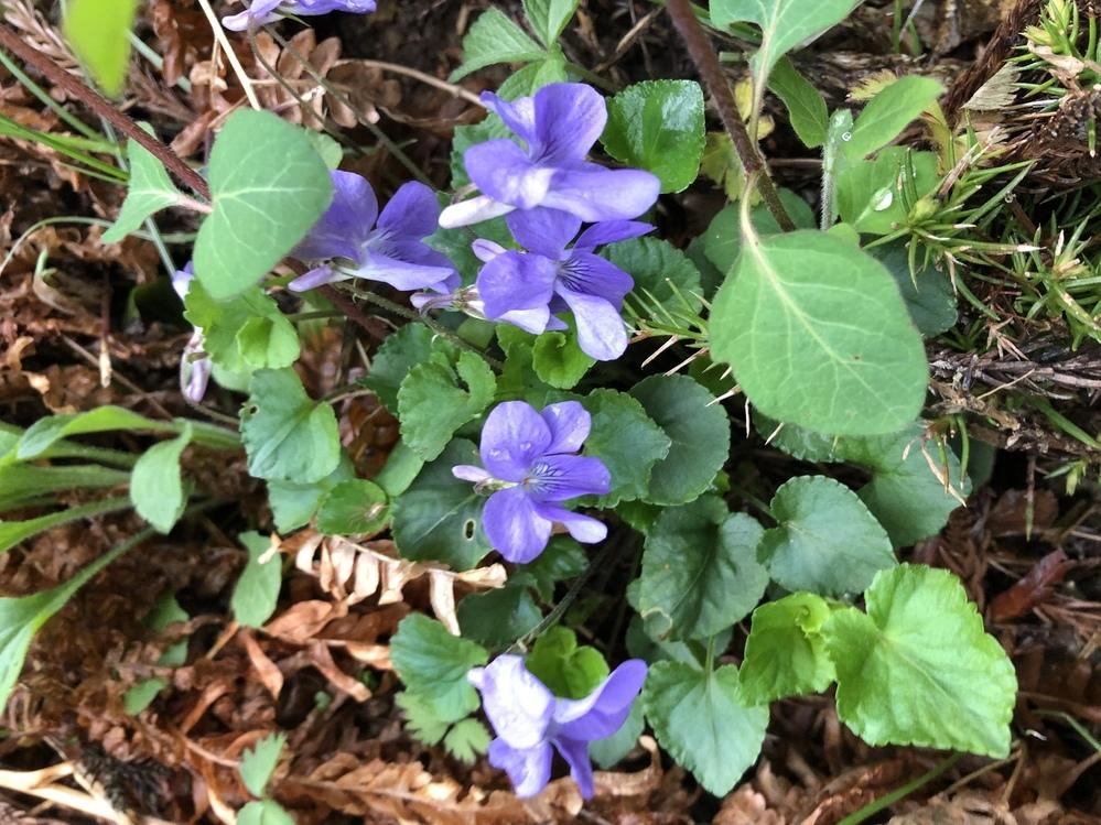 これは何という花ですか? 山の斜面にたくさん咲いていました!