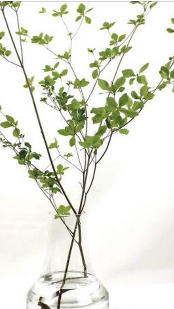 写真の様なドウダンツツジの枝物は良く見かける白い鈴蘭の様な花が付いた密集した物が大きくなった物でしょうか? それとも種類が違うのでしょか?