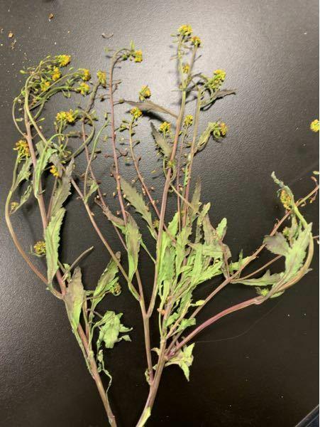 この植物の名称はなんでしょう?