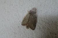 2021.4.17 愛知県瀬戸市海上の森 蛾の名前をお教えください。