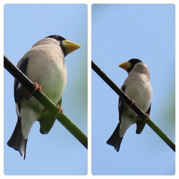 鳥の種類 写真の鳥について 種類が分かる方、ご教示ください。 本日福岡県で撮影したものです。