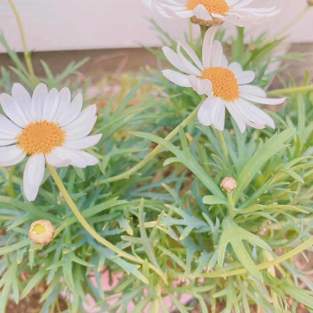 このお花の名前を教えてください!