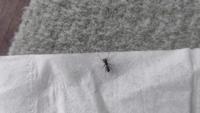 ふと窓についていたアリをみたら尻に糸引いてるんです。更によく見ると触手にみえたものは足にみえてきてこれって蜘蛛ですよね? もしそうならどんな種類なのですか?