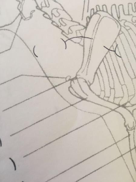 ※大至急※ 犬の骨格についてです。 肩峰付近にあるこの小さな骨の名称はなんですか?