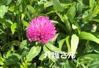 この花の名前は何でしょうか? 撮影場所は兵庫県で撮影日時は2021年4月17日です。 よろしくお願いします。