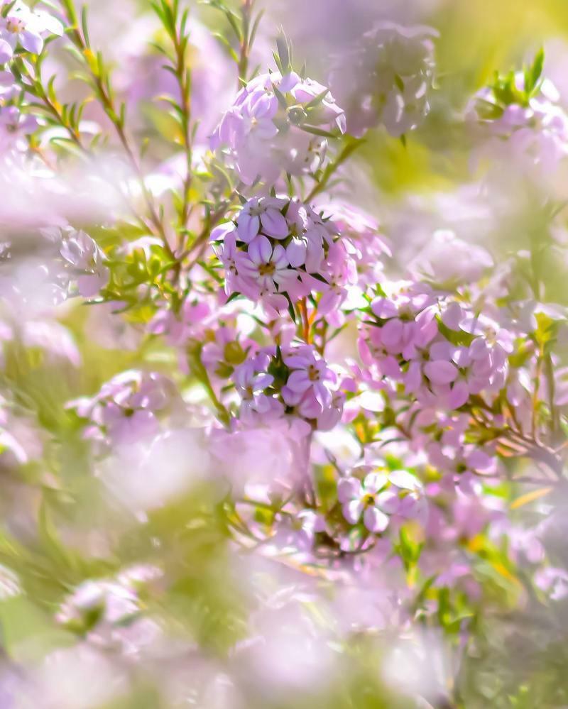 この写真のお花の名前を教えてくださいm(*_ _)m たびたびすみません。いつもありがとうございます!