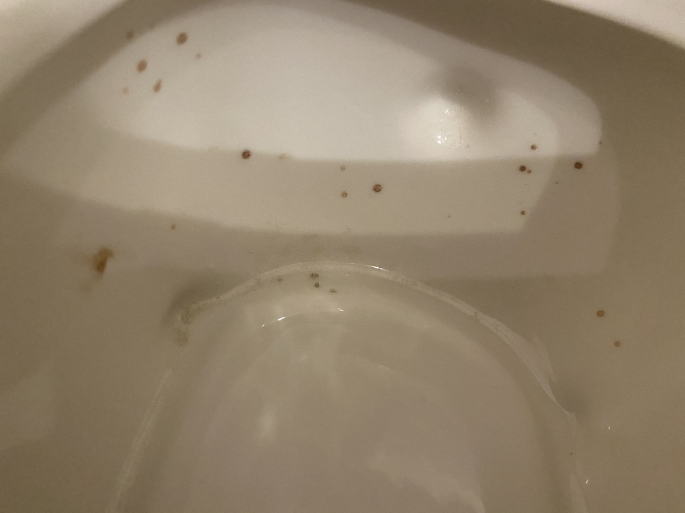 ゴールデンハムスターについての質問です。 トイレや巣箱にこういった茶色い反転がついているのですがこれはなんでしょうか… 食欲もあり元気に走り回っています。 外傷は特に見られないので、もしかしたら血尿かもしれません。。 どうにか尿を採取すべく奮闘しているのですが、こういう斑点を見たことある方宜しくお願いします。