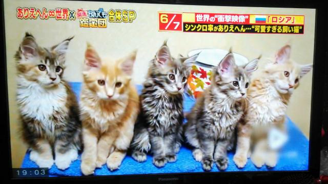 どの子猫が好きですか
