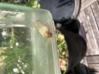 <虫の幼虫・画像有>  今朝ベランダにいました。 なんの幼虫かわかりましたら教えて頂きたいです!