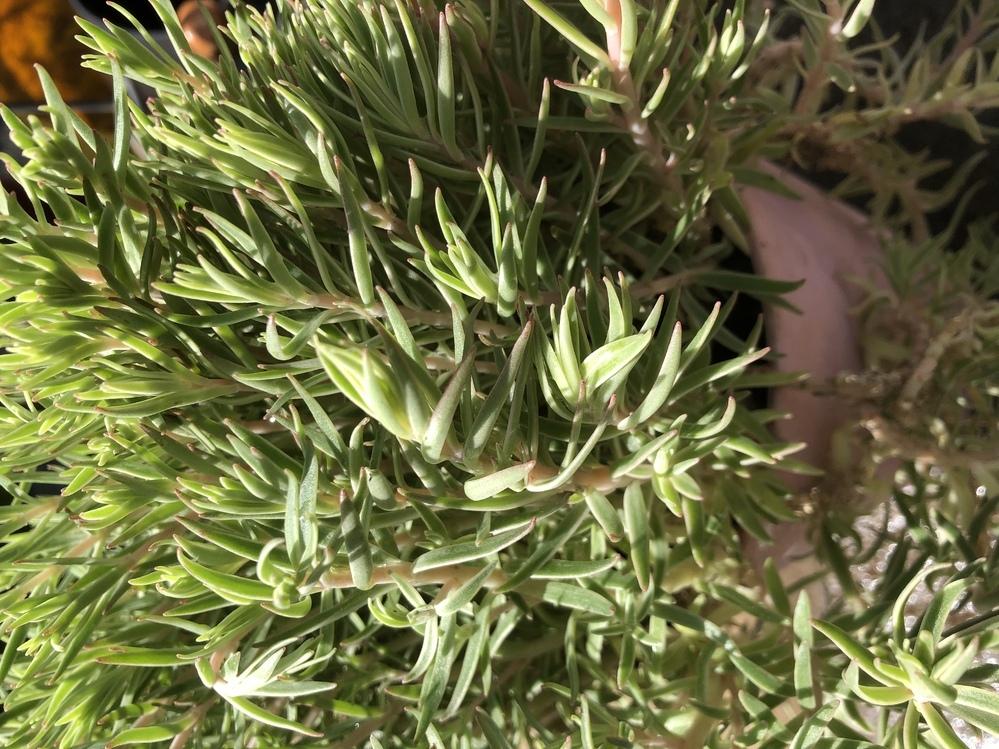 空の植木鉢に自然繁殖した植物があるのですが、捨てるかどうするか迷っています。 何の植物かわかる方いますか?