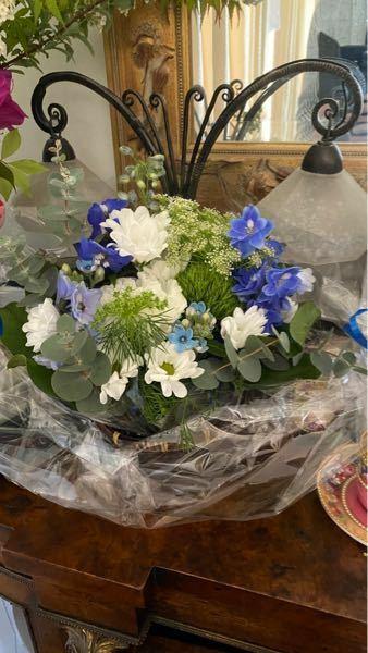この青い花はなんていう花ですか?