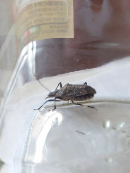 この虫、なんで名前か知ってる方いらっしゃいますか?