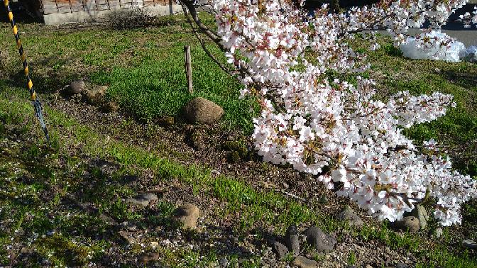 この写真は春らしさがありますよね?