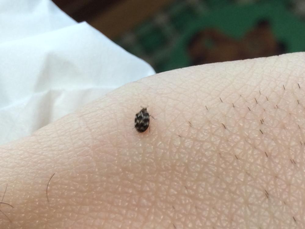 この虫の名前わかりますか?1ミリくらいです。