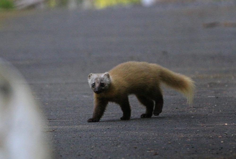 山奥で出会った生き物です。 名前は何ですか?