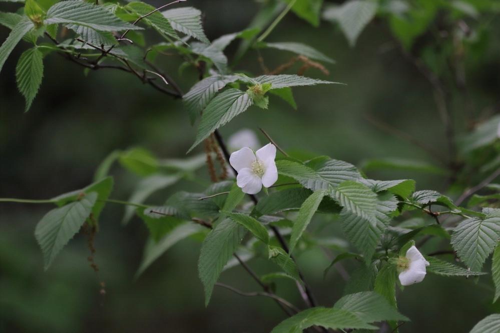 この植物の名前を教えて下さい。