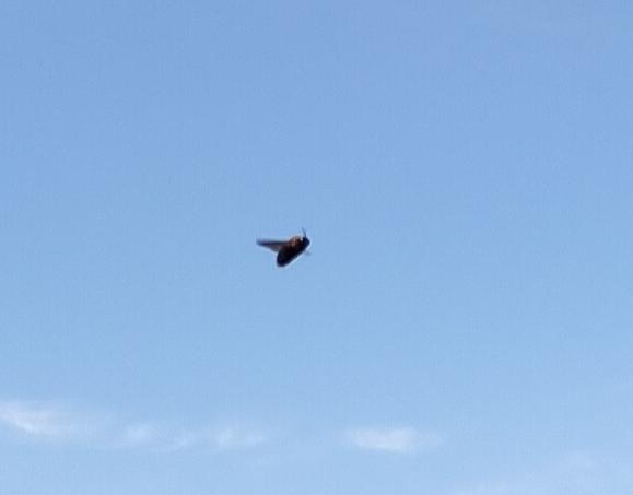 キャンプに行ったら私のテント付近ばかりに大きなハチ見たいなのが3匹がしばらくの間飛び回っていました。 このハチみたいなのは危険でしょうか。