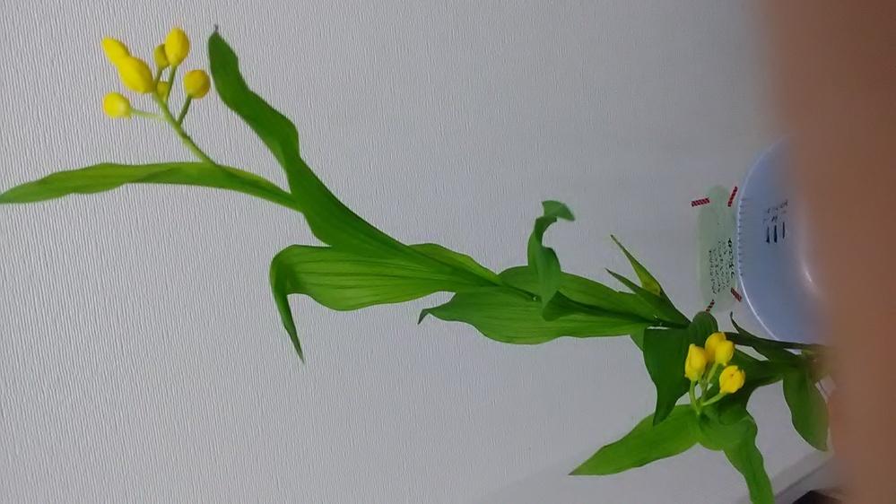 野原に咲いていた花を間違って折ってしまったのですが、この花はなんという名前の花ですか?