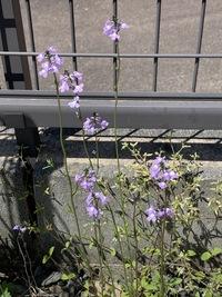 コレで最後です。花の名前を教えて下さいm(_ _)m